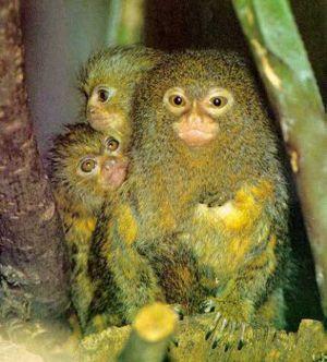 جالبترین حیوانات دنیا(+عکس)