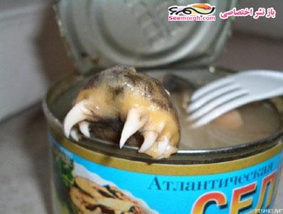 حیوان وحشتناک در کنسرو تن ماهی!! (+عکس) www.TAFRIHI.com