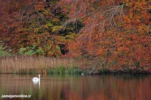 پاییز دانمارک