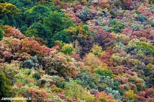 طبیعت پاییز در جنگل های ساووا در شرق و فرانسه