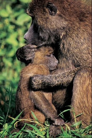 عکسهای برتر دنیای حیوانات به انتخاب نشریه نشنال جئوگرافی www.taknaz.ir