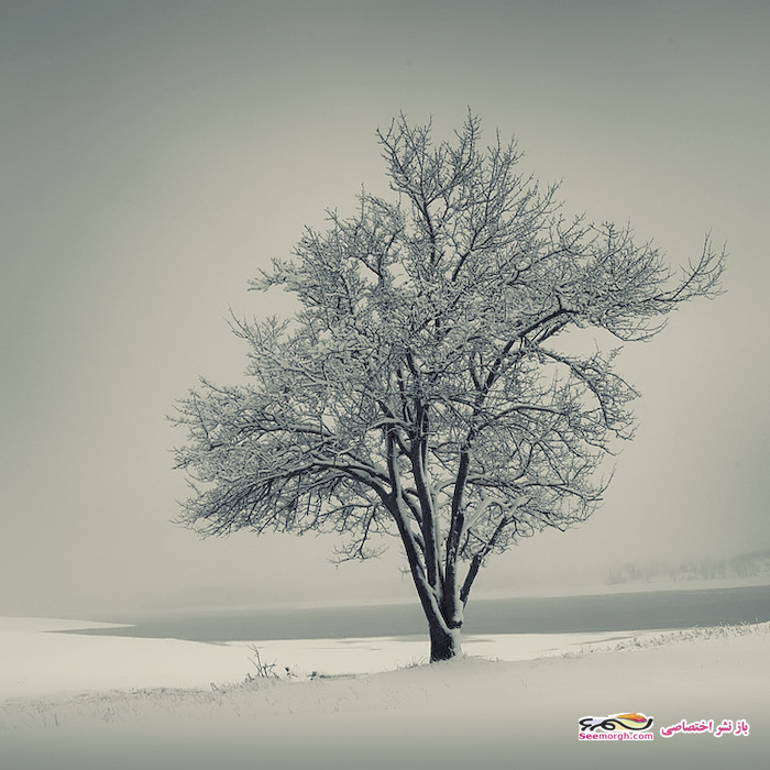 فصل زمستان