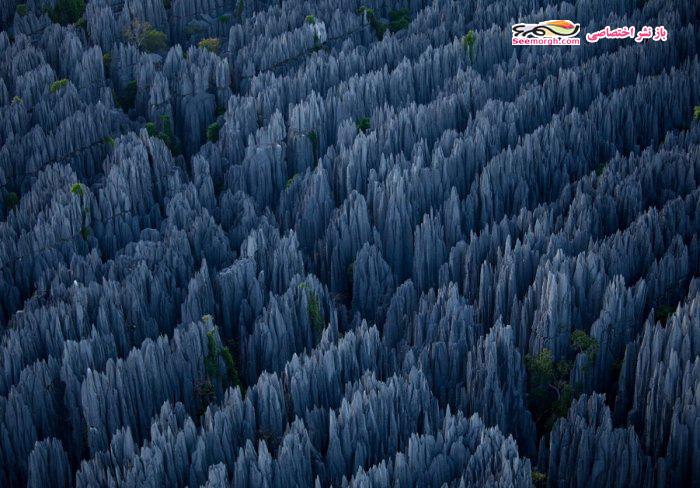 [Image: Madagascar_06.jpg]