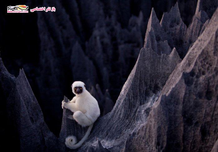 [Image: Madagascar_09.jpg]