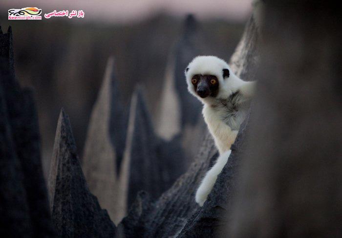 [Image: Madagascar_10.jpg]