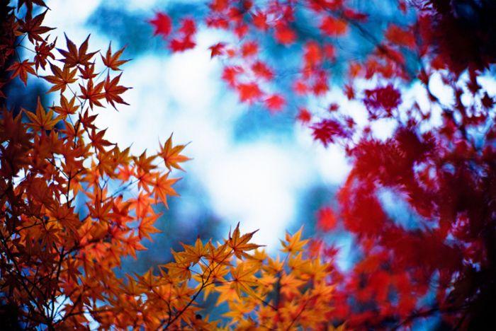 عکس های منتخب روز 27 بهمن www.TAFRIHI.com