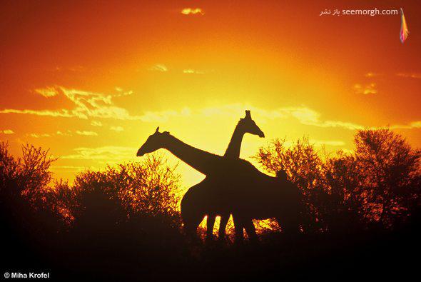 30 عکس خاص و زیبا به شیوه ضد نور! www.TAFRIHI.com