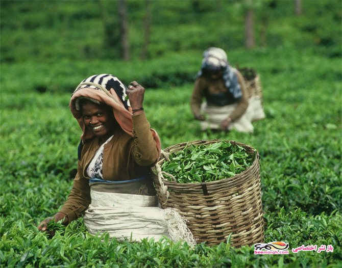 زنان چای چین
