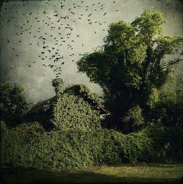 [Image: artistic-surreal-photomanipulation-by-sa...ban-30.jpg]