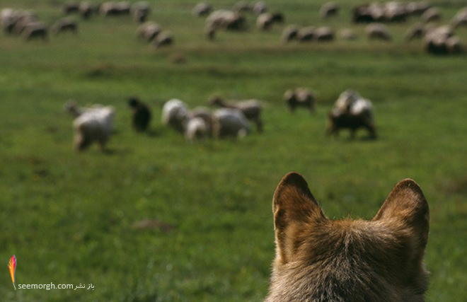 عکس دیدنی استفان ویداستراند از حیات وحش