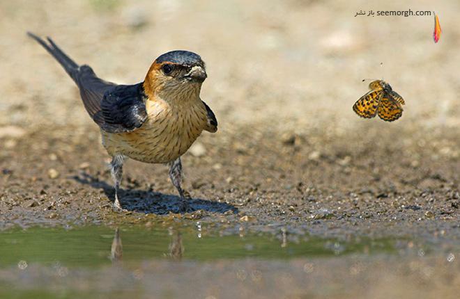 عکاسی از حیات وحش دییتر دامسچن