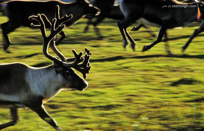 عکاسی از حیات وحش جسپر تونینگ