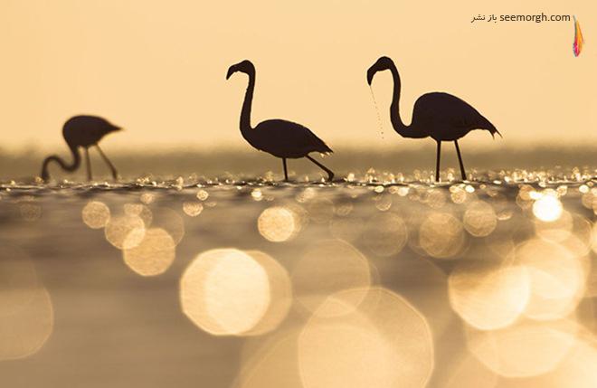 کونارد وورس عکاسی حیات وحش