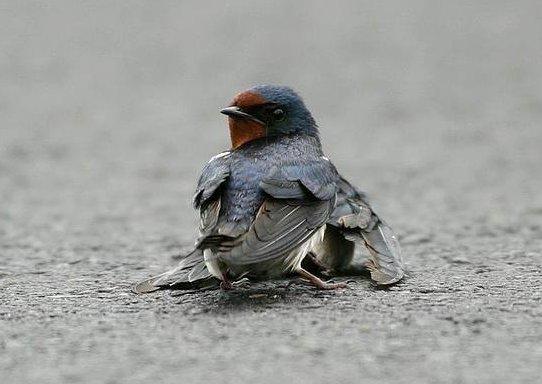 عاشقانه ترین عکس جهان! - Bitrin.com