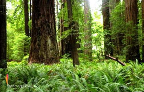 جنگل اندور