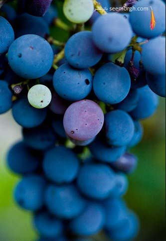 http://www.seemorgh.com/uploads/1391/01/bluethemedimages14.jpg