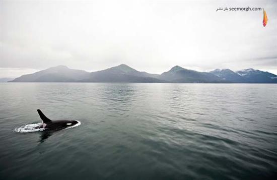 [Image: Alaska_Photography_by_Navid_Baraty_10.jpg]