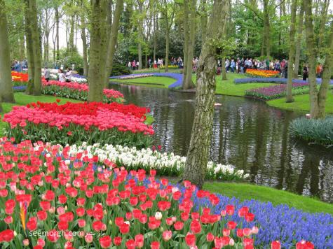 http://www.seemorgh.com/uploads/1391/04/Keukenhof-Gardens-4.jpg