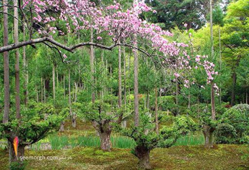 http://www.seemorgh.com/uploads/1391/04/Rypan-ji-1.jpg