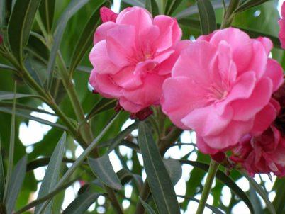 10 گل زیبا و خطرناک