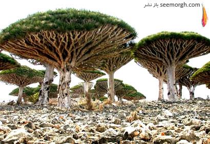 [Image: Socotra-Island-2.jpg]