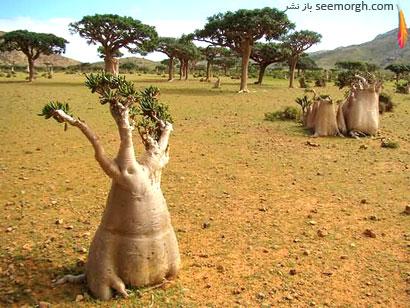 [Image: Socotra-Island-3.jpg]