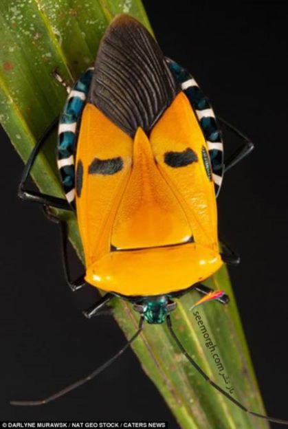 مطالب داغ: حشره جالبی که شبیه خواننده مشهور هالیوود است