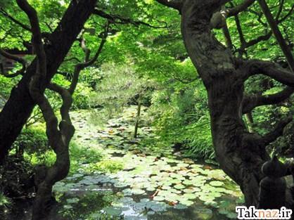 http://www.seemorgh.com/uploads/1392/09/manzareh8.jpg