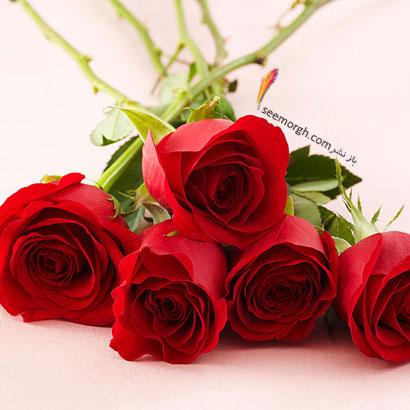 زبان گل ها,برای کسی که دوستش داریم چه گلی بخریم,معنای هر گل در رابطه,رز قرمز