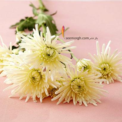 زبان گل ها,برای کسی که دوستش داریم چه گلی بخریم,معنای هر گل در رابطه,گلهای داوودی سفید