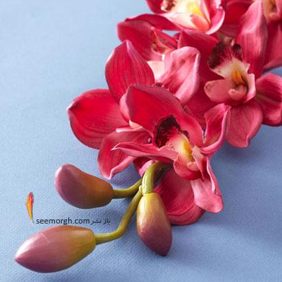 زبان گل ها,برای کسی که دوستش داریم چه گلی بخریم,معنای هر گل در رابطه,ارکیده صورتی