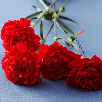 زبان گل ها,برای کسی که دوستش داریم چه گلی بخریم,معنای هر گل در رابطه,میخک قرمز