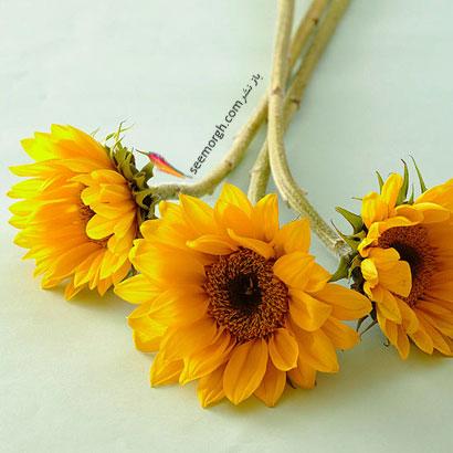 زبان گل ها,برای کسی که دوستش داریم چه گلی بخریم,معنای هر گل در رابطه,آفتابگردان