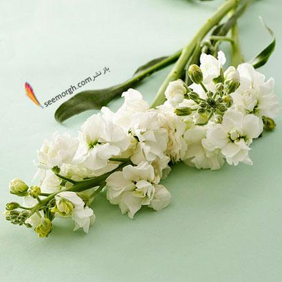 زبان گل ها,برای کسی که دوستش داریم چه گلی بخریم,معنای هر گل در رابطه,شب بو سفید