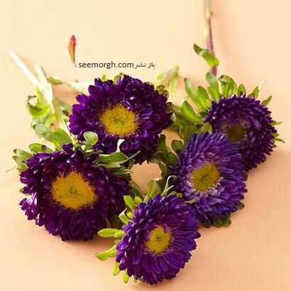 زبان گل ها,برای کسی که دوستش داریم چه گلی بخریم,معنای هر گل در رابطه,گل مینای ارغوانی