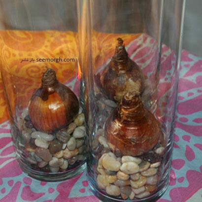 PW-Decor-plant-bulbs.jpg