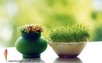 نوروز,هفت سین,سبزه,عید
