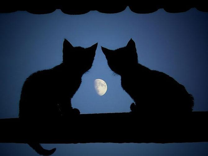 ماه متعلق به همهست!! (هنر عکاسی) www.TAFRIHI.com