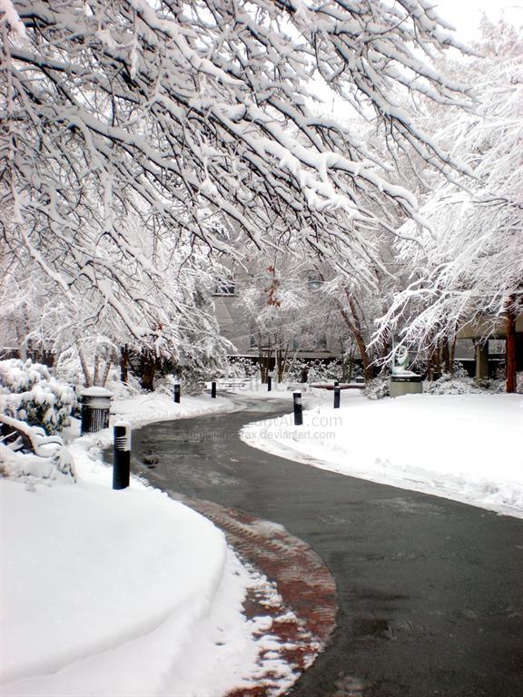 عکسهایی از می ساده 20 عکس زیبا از برف به بهانه نزدیک شدن زمستان!!