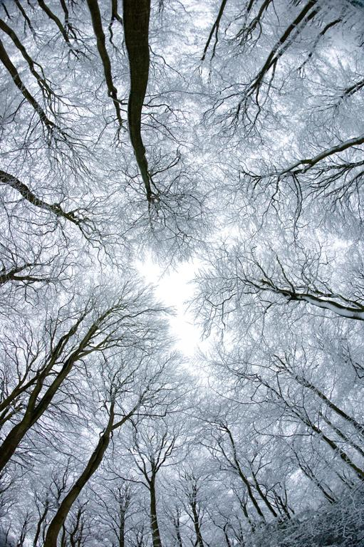 http://www.seemorgh.com/images/iContent/1389-12/Trees-in-Snow.jpg