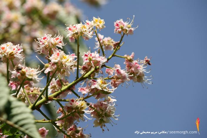 عکسهای دیدنی از فصل بهار در کاخ سعدآباد www.TAFRIHI.com