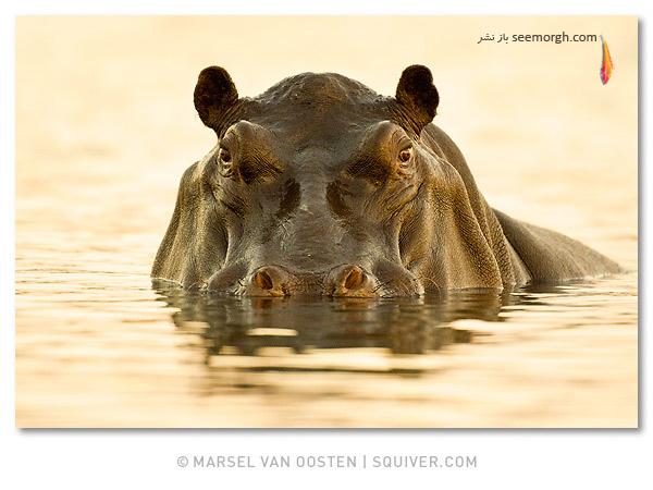 گزارش تصویری: عکاسی بینظیر از حیوانات! www.TAFRIHI.com