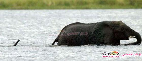 2 عکس استثنائی از دنیای حیوانات!!