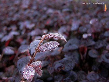 http://www.seemorgh.com/uploads/1390/11/dewphotos1.jpg