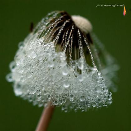 http://www.seemorgh.com/uploads/1390/11/dewphotos2.jpg