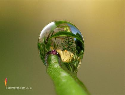 http://www.seemorgh.com/uploads/1390/11/dewphotos21.jpg