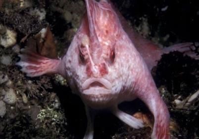 ماهی عجیب | www.infopanel.ir