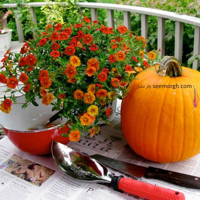 وسایل مورد نیاز برای درست كردن گلدان با کدو تنبل,گلدان با کدو تنبل,درست کردن گلدان با کدو تنبل