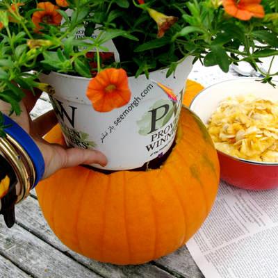 گلدان با کدو تنبل,درست کردن گلدان با کدو تنبل,مرحله ششم درست کردن گلدان با کدو تنبل