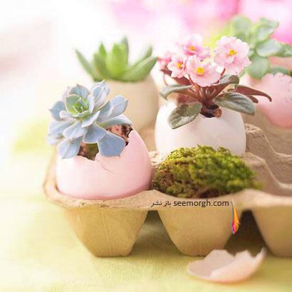 پوسته تخم مرغ جایی برای گل های زیبا